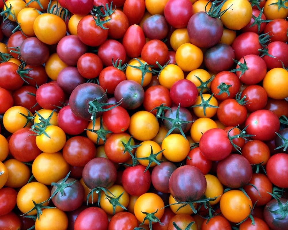 Syn Free Tomato Bruschetta | Slimming World - Pinch Of Nom